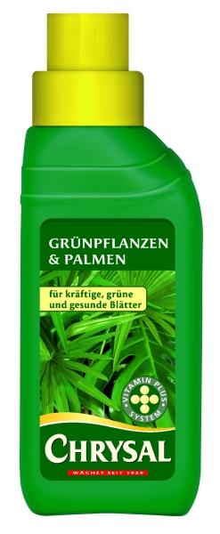 1454_GPPKN_Gruenpflanzen_und_Palmen.jpg